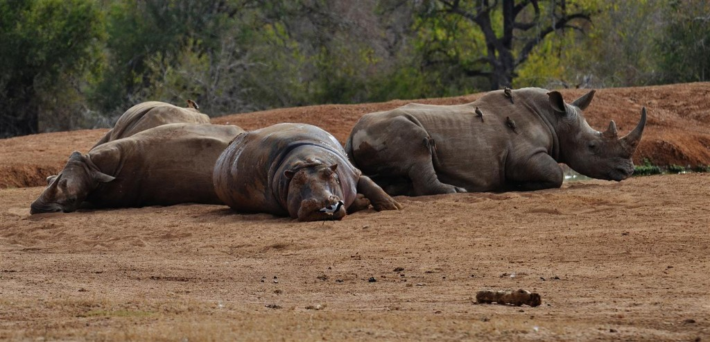 Hlane-Royal-National-Park-1024x493 10 of The Very Best Places to Visit in Swaziland