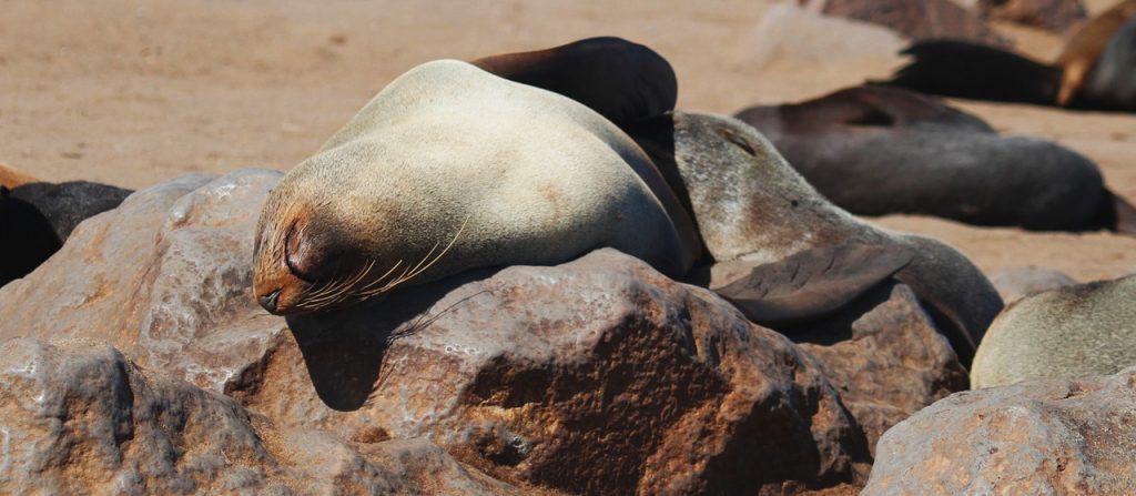 seal-1305050_1280-1024x447 10 Incredible Places to Visit in Namibia